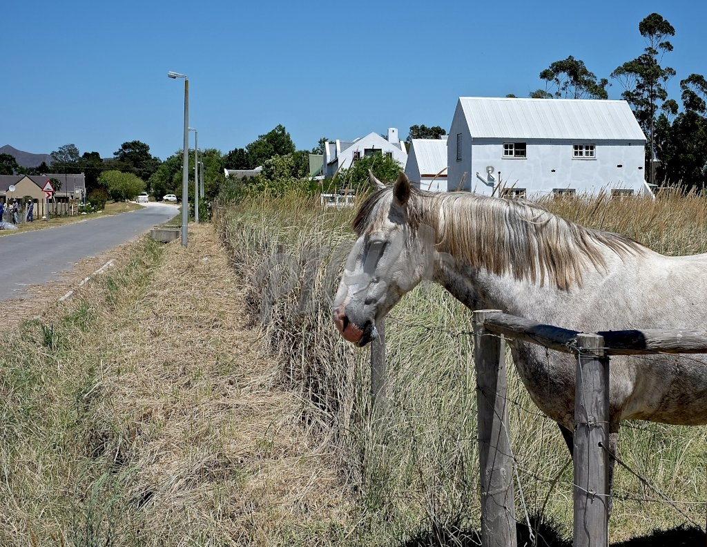 White horse by the road, South Africa