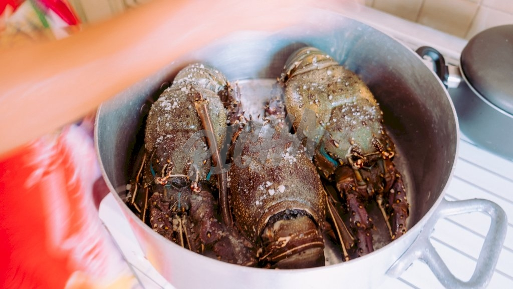 Cooking Lobster