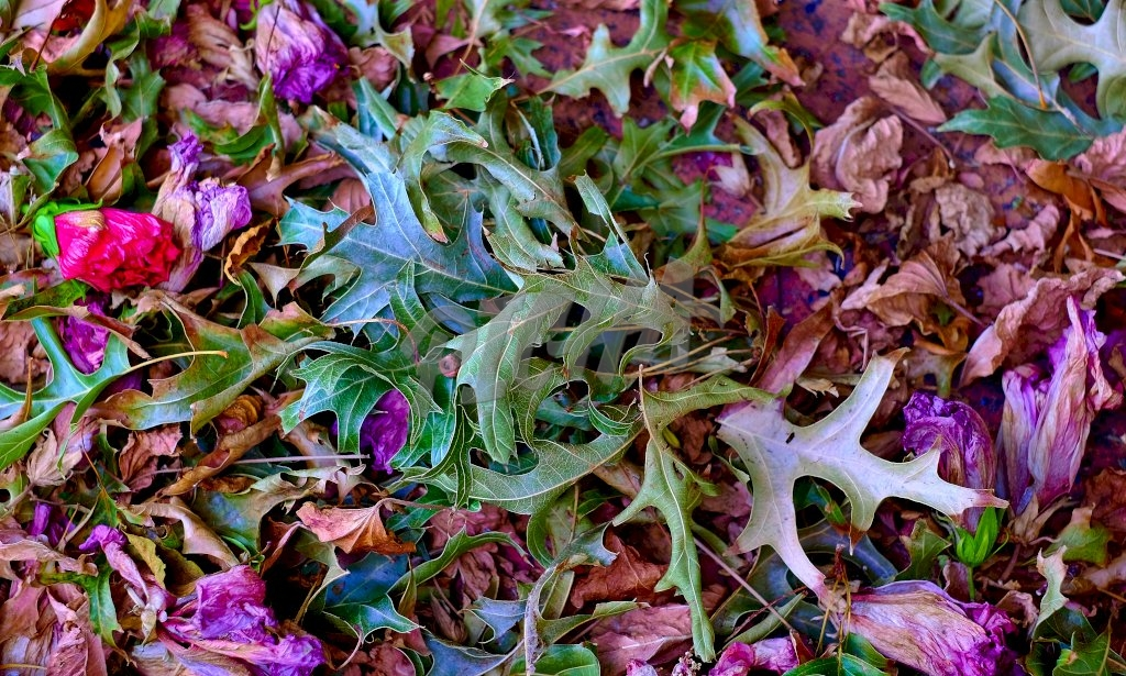 Dried flowers and leaves