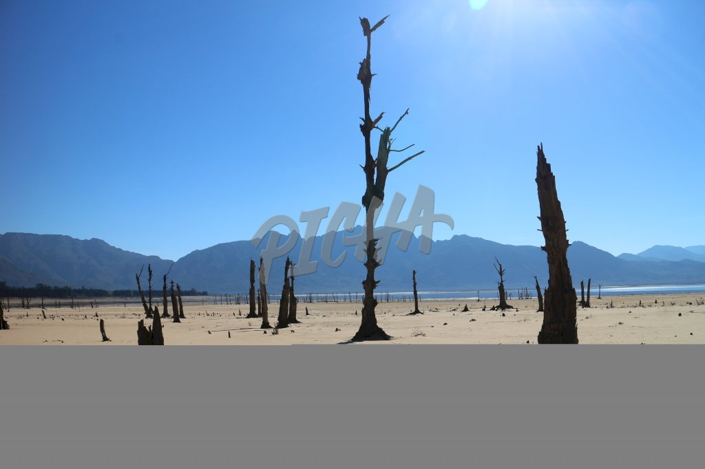 Empty lake and barren trees