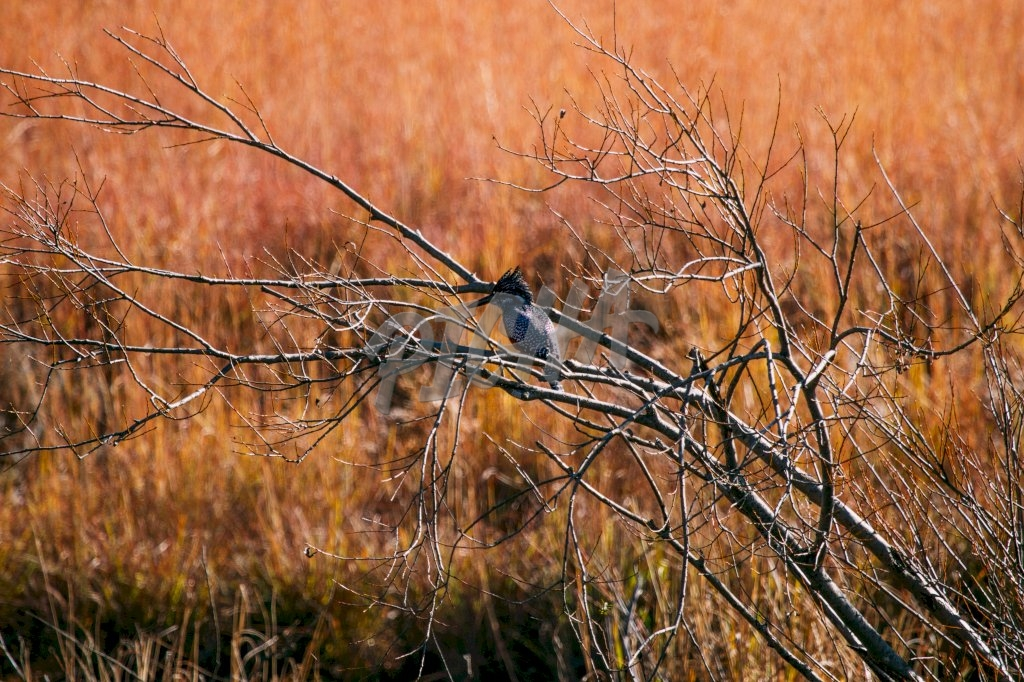 A bird in Lotheni reserve, South Africa