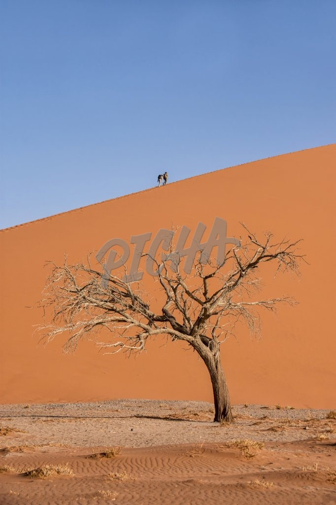 Tourists climbing a dune in the Namibian desert