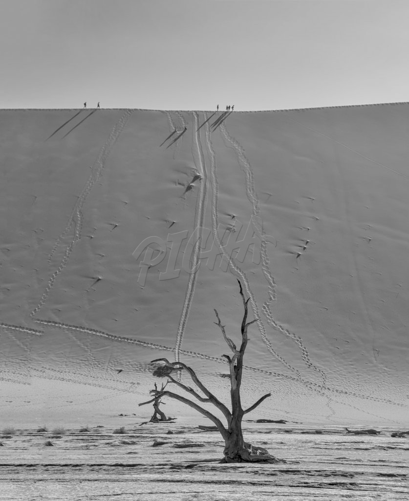 Tourists climbing a dune in the Namibian desert at Dead Vlei