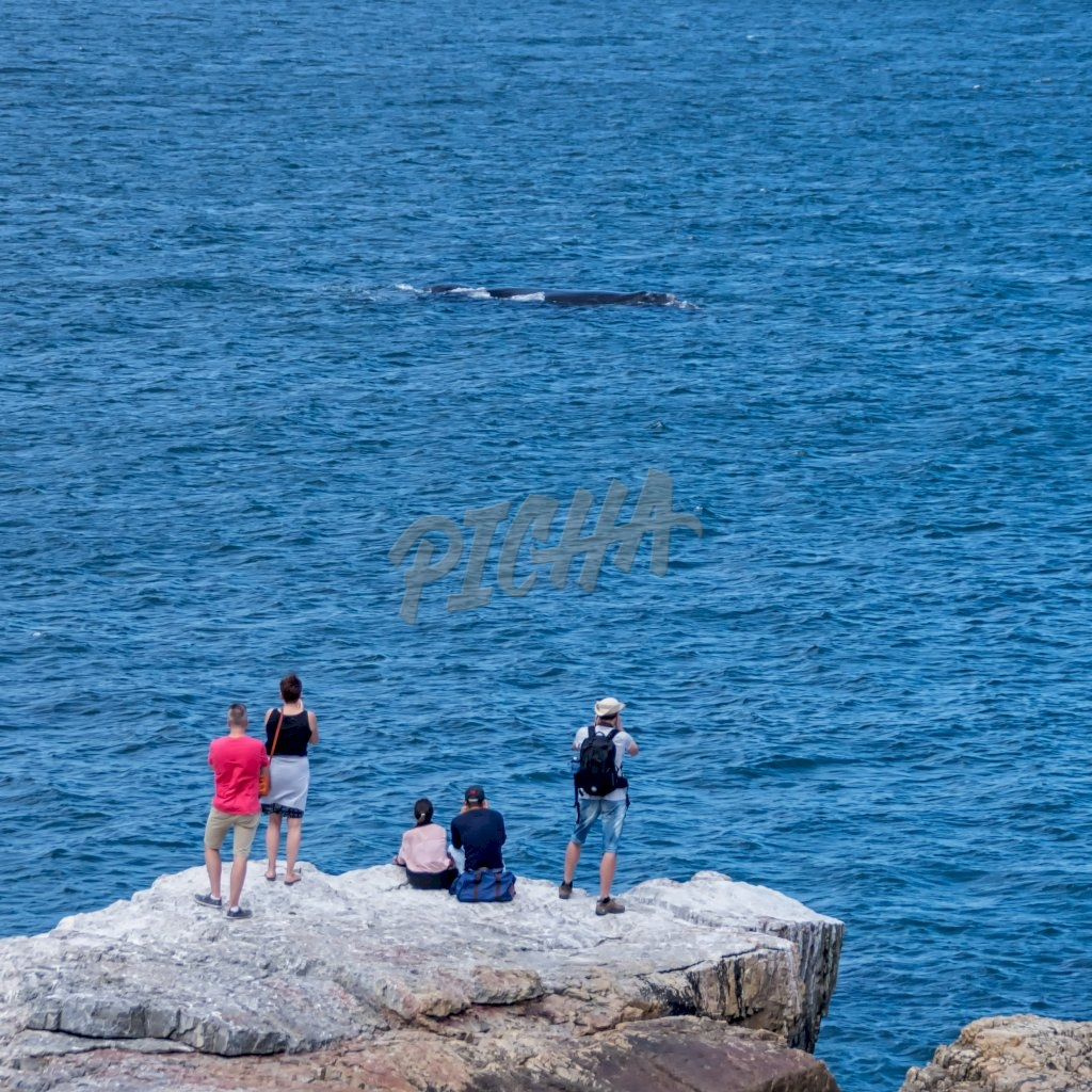 watching Southern Right Whales