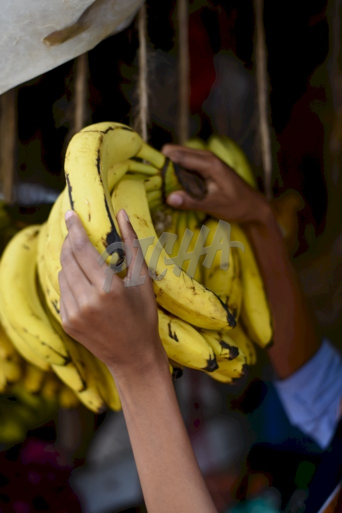 Hands holding some bananas
