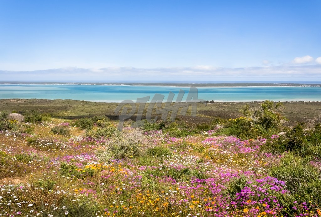 View of wild flowers with ocean