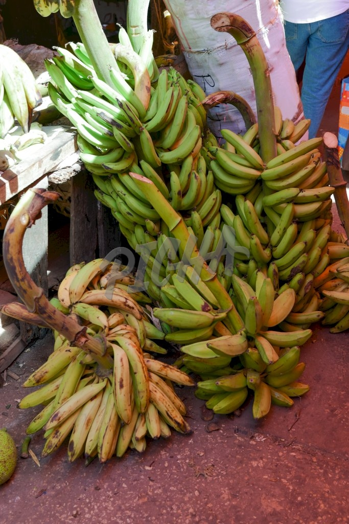 A bunch of bananas await sale
