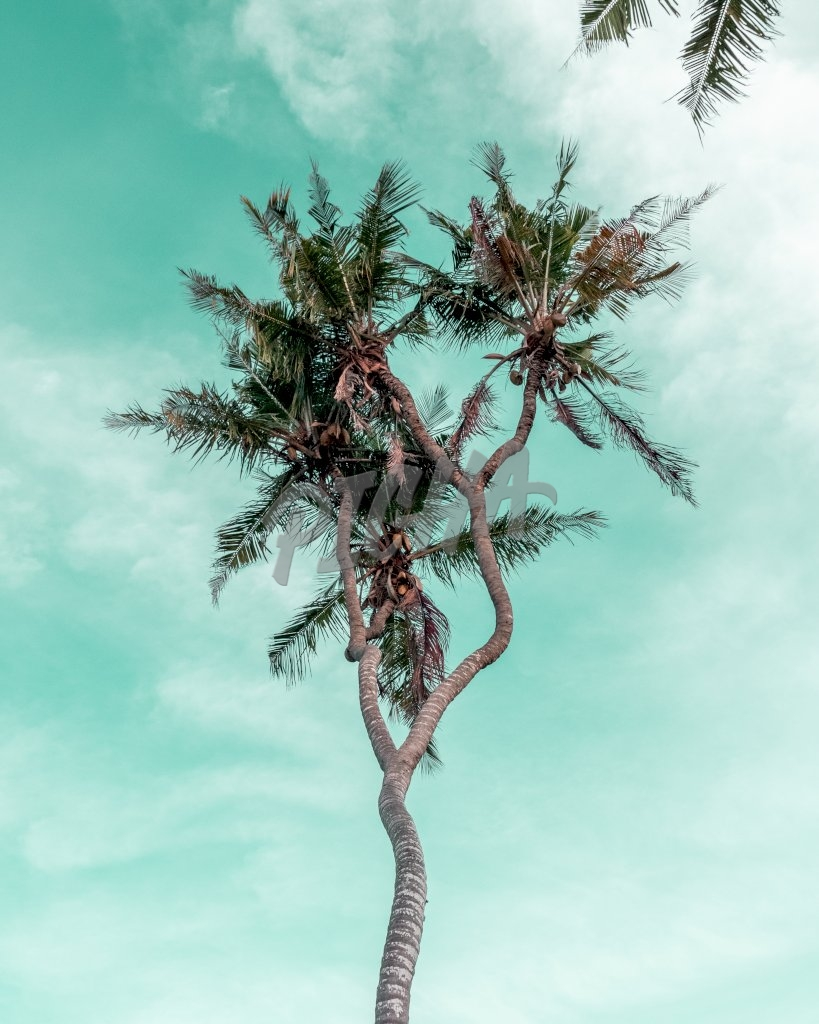 Coconut tree in retro green