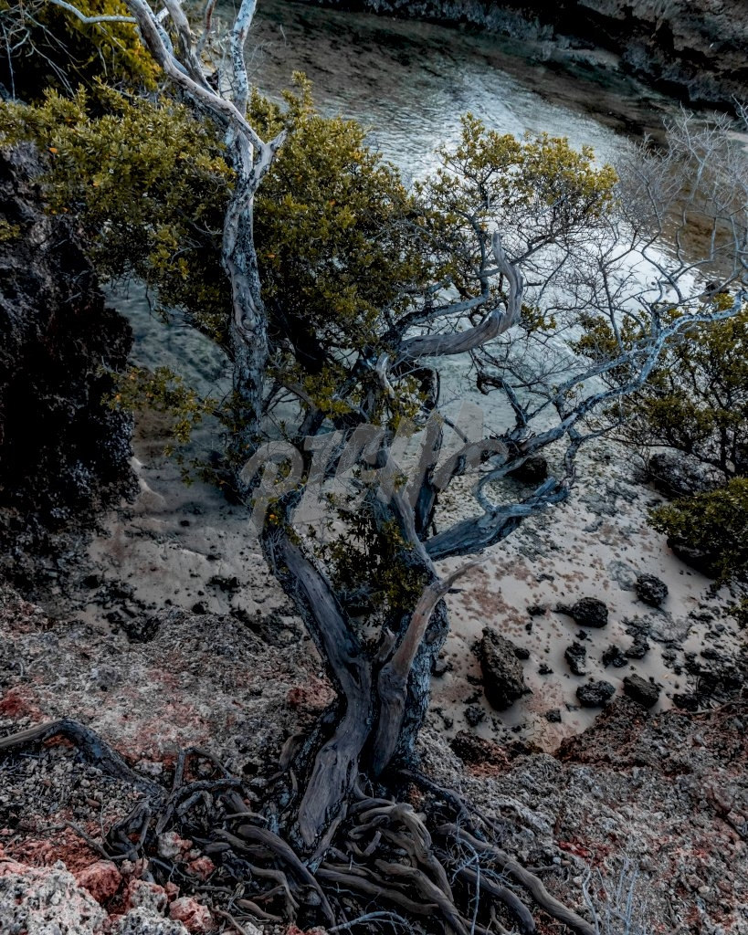 Surviving tree on the reefs