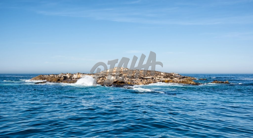 The Cape Fur Seal colony of Seal Island in False Bay