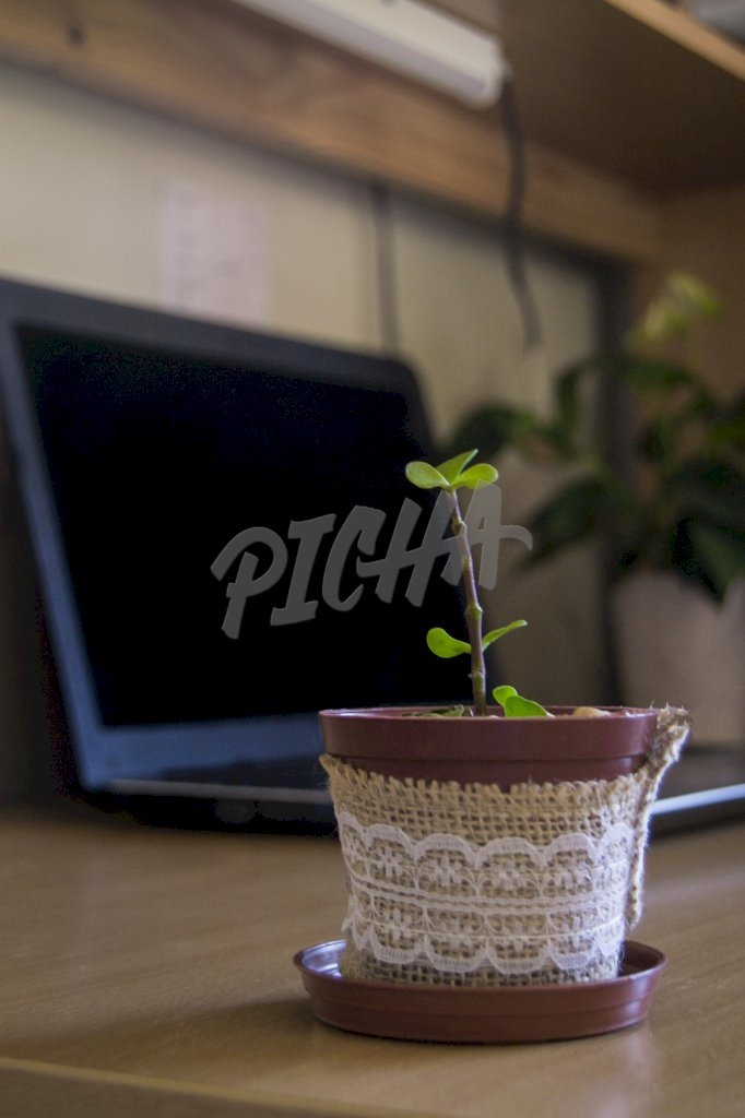 New growth in the office