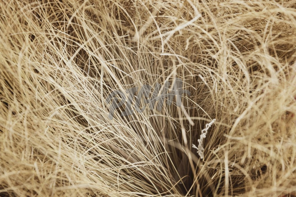 Abstract-African broom closeup