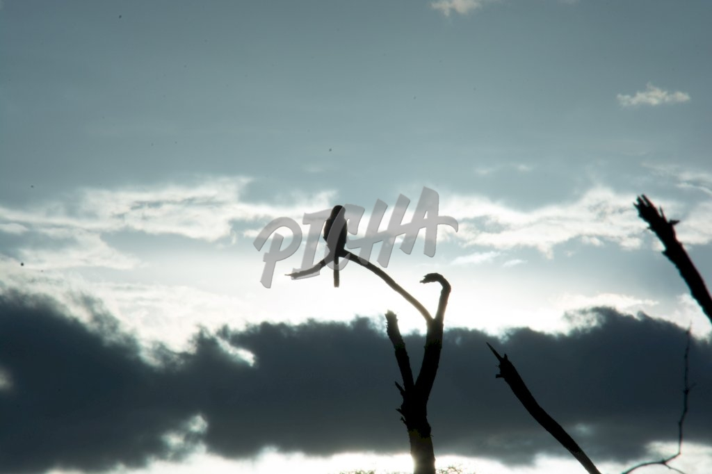 Backlit bird on a branch