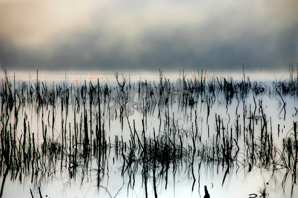 Reeds in the water of Theefontein dam