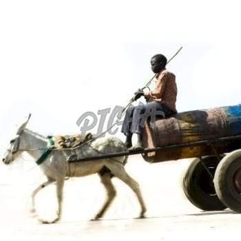 Water cart| donkey and young man in Sudan