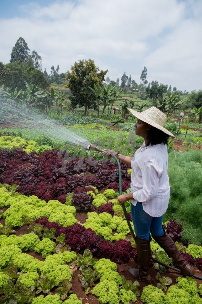 Watering a vegetable garden