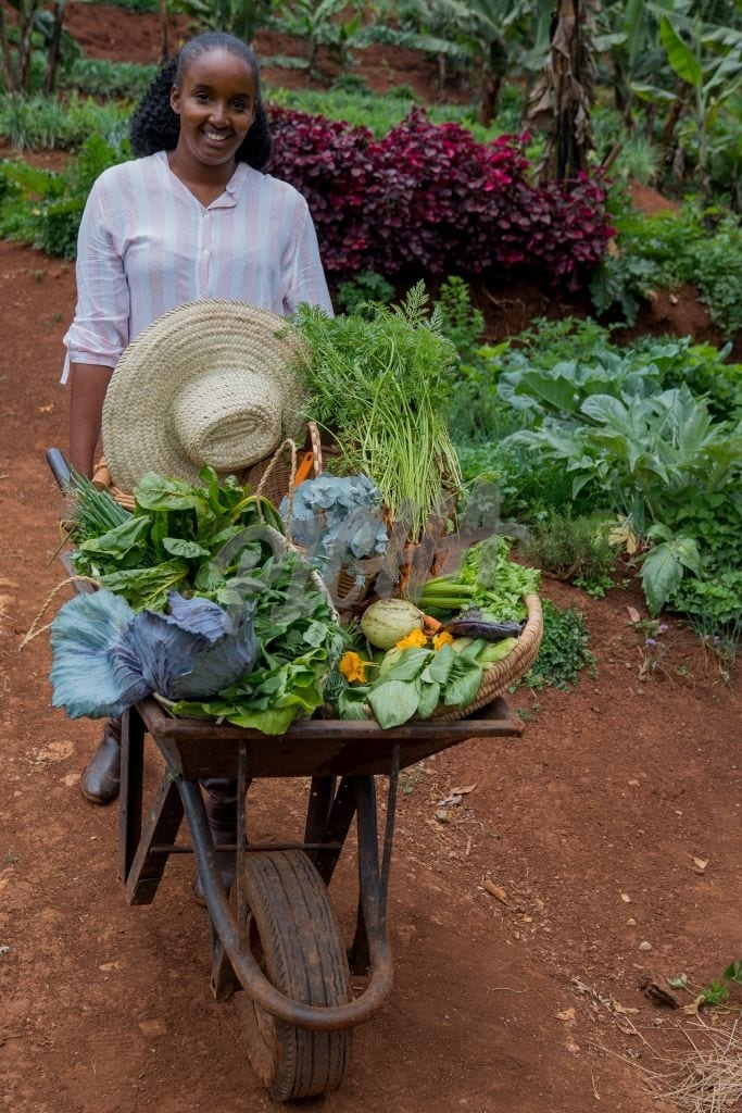 Harvesting vegetables from the garden