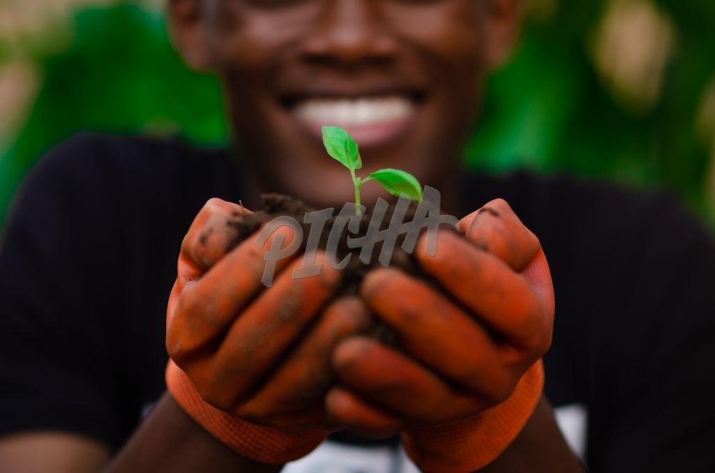 Seedling In Gardener's hands