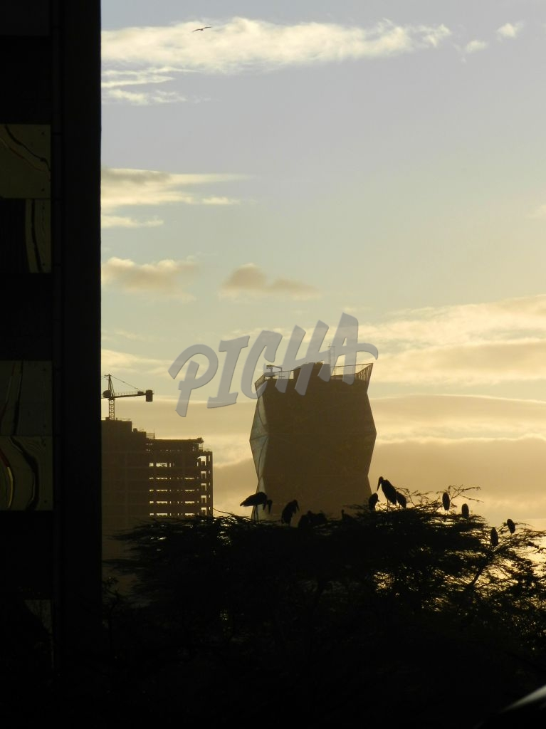 sunset urban silhouette buildings and birds in tree