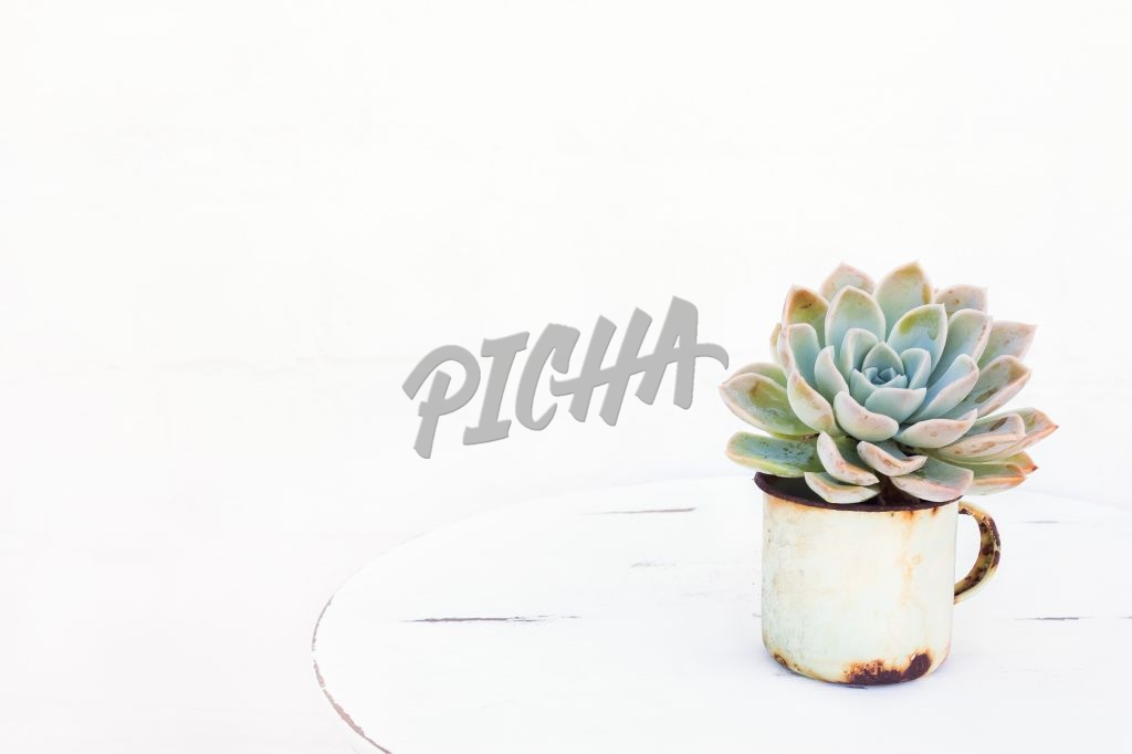 Succulent plant in tin cup on table with white background