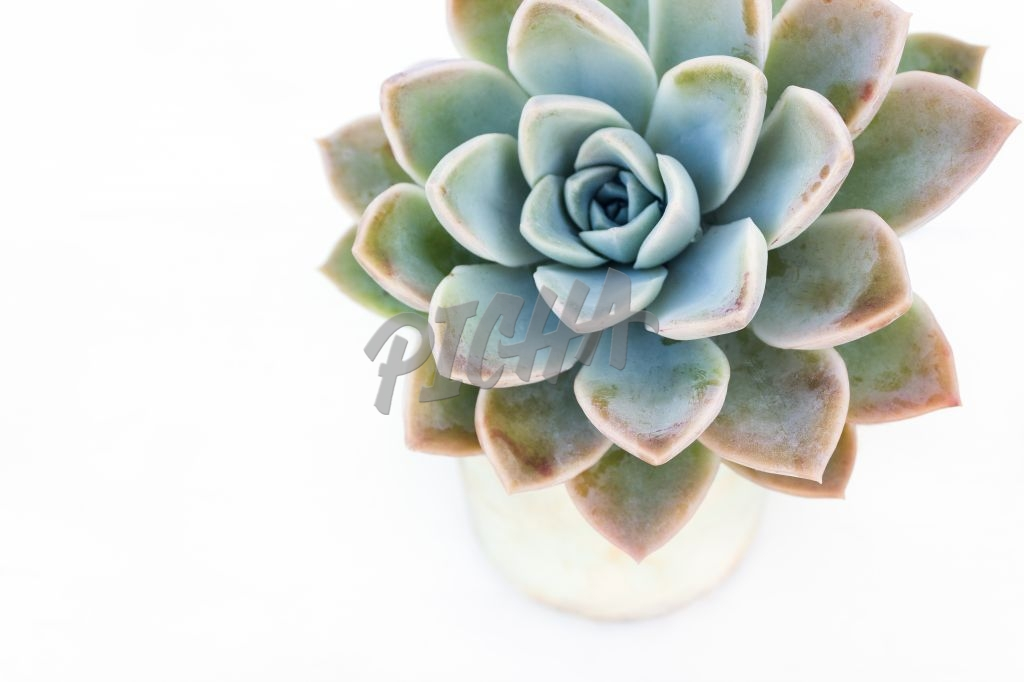 Succulent plant with white background