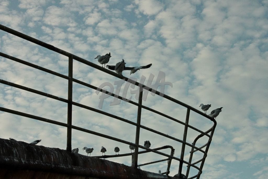 Birds perched on railing