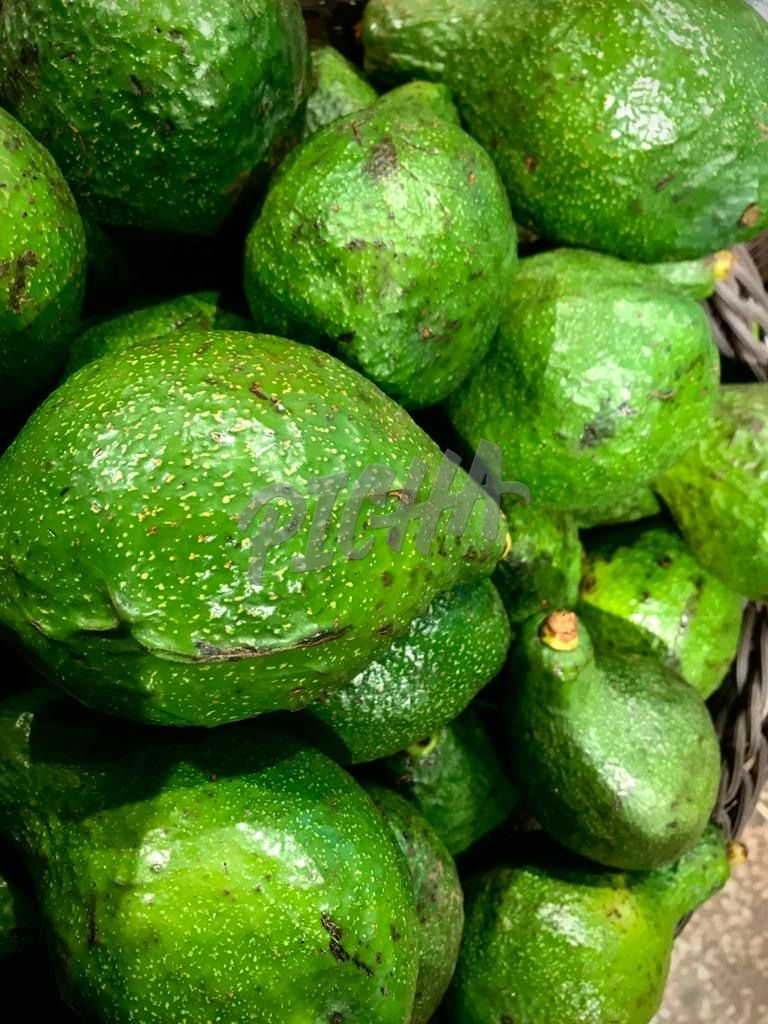 Avocados at the green grocer