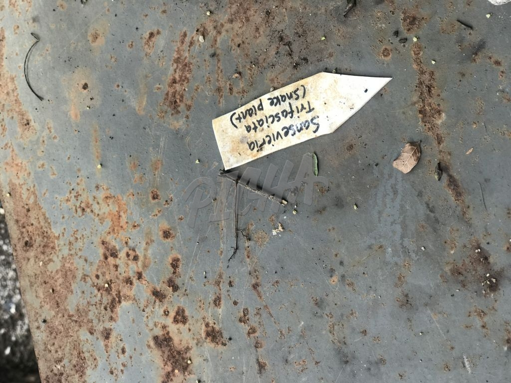 Tags that identify trees