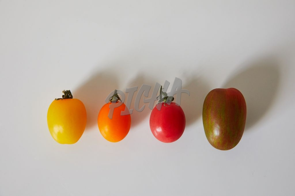 Robot tomatoes in a row