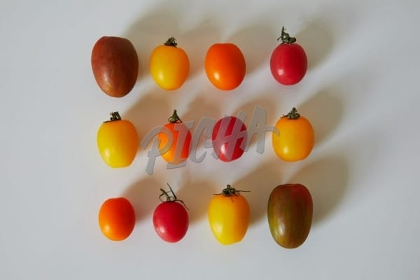 Robot tomatoes in a grid
