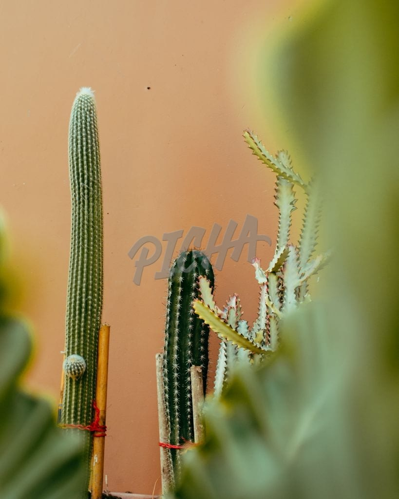 shapes of cactus