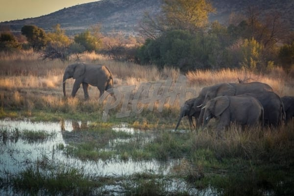 Elephants by a water source