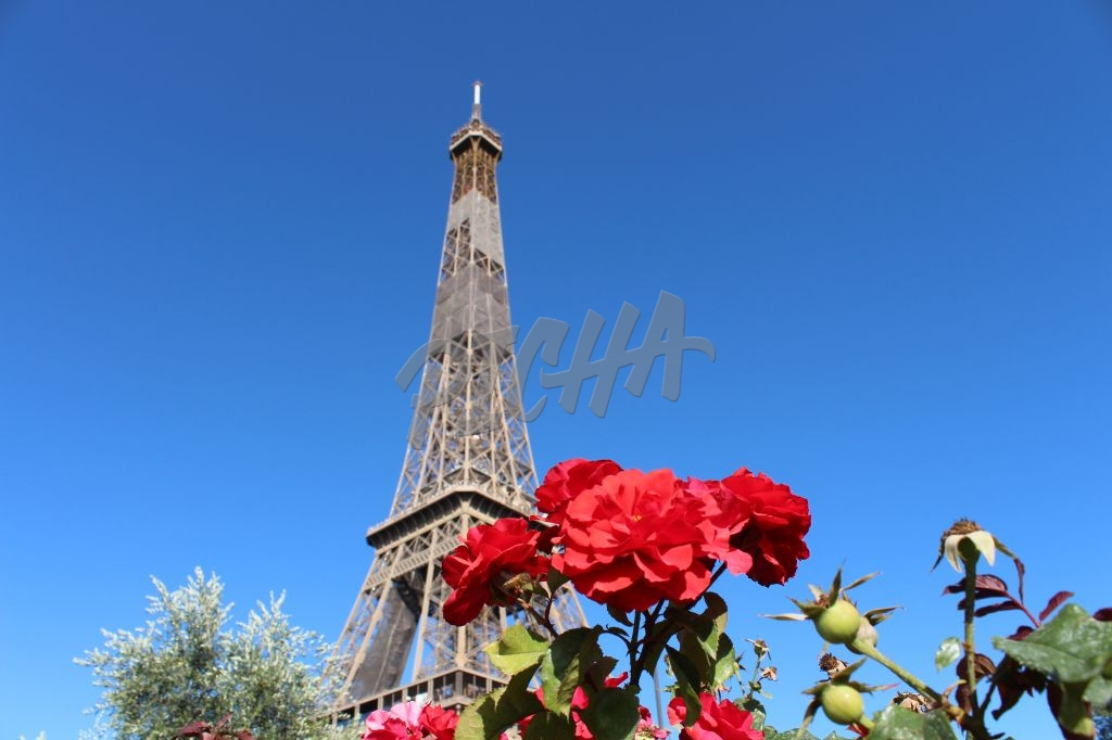 Eiffel Rose Red