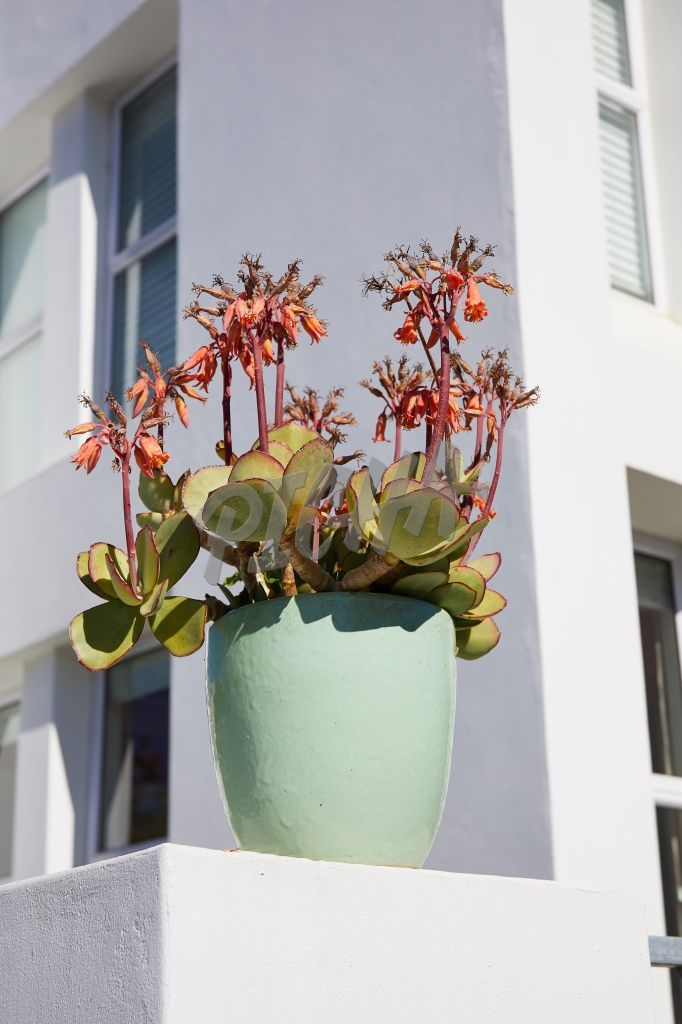 Succulent in pot on wall