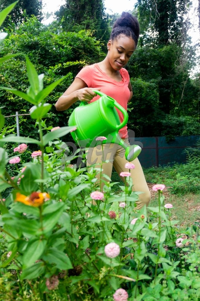 Using a watering can