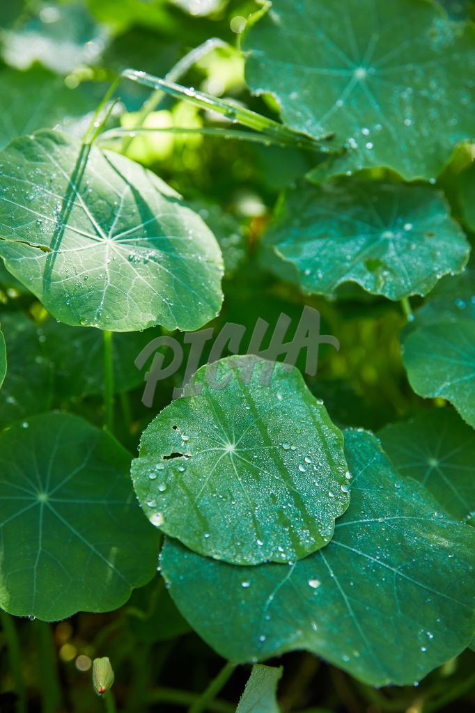 Condensation on leaves