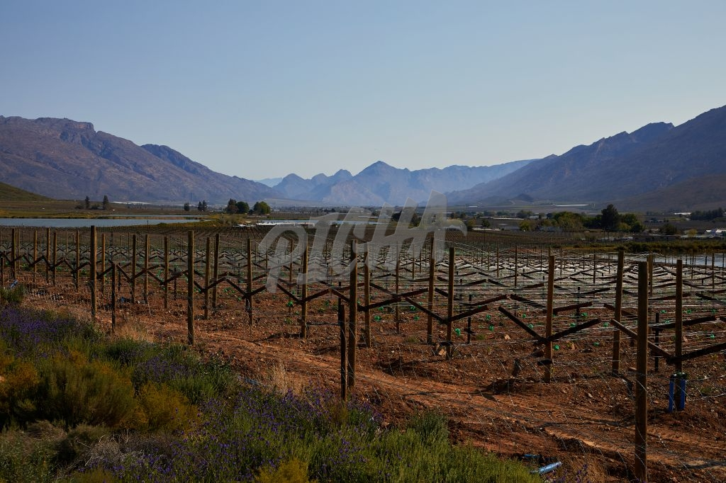 Farming in Hex River Valley