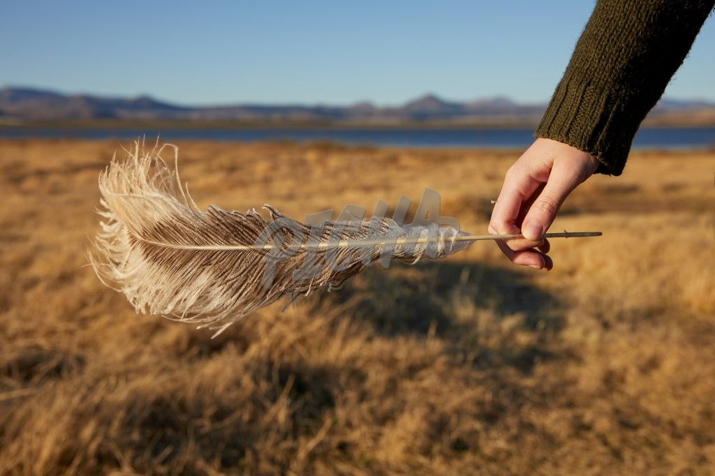 Feather found on an afternoon walk