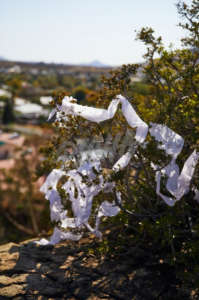 Toilet paper caught in a tree