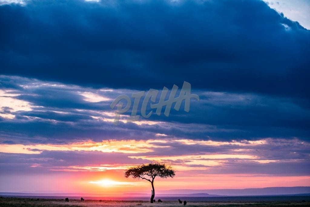 Magical Maasai Mara Sunset