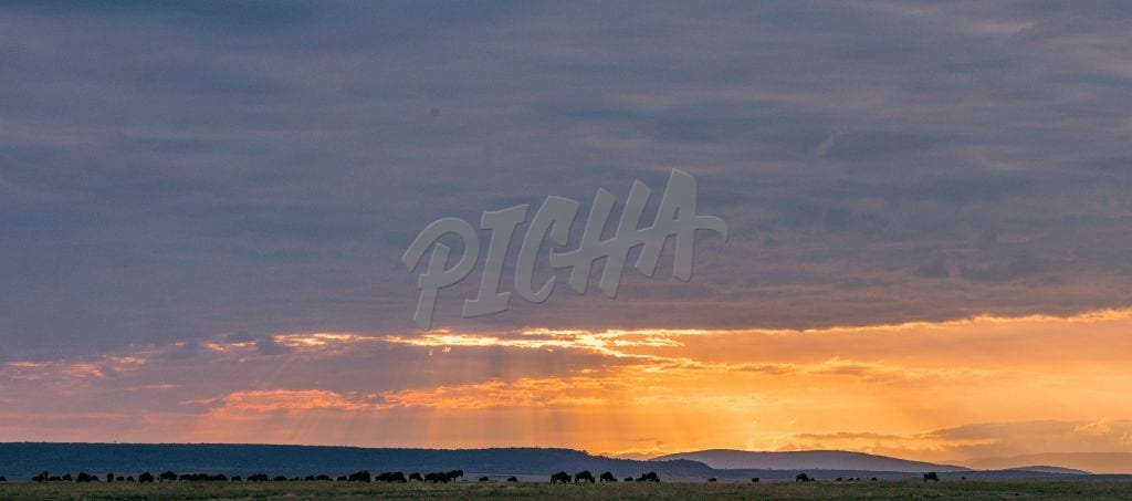 Magical Maasai Mara Sunrise