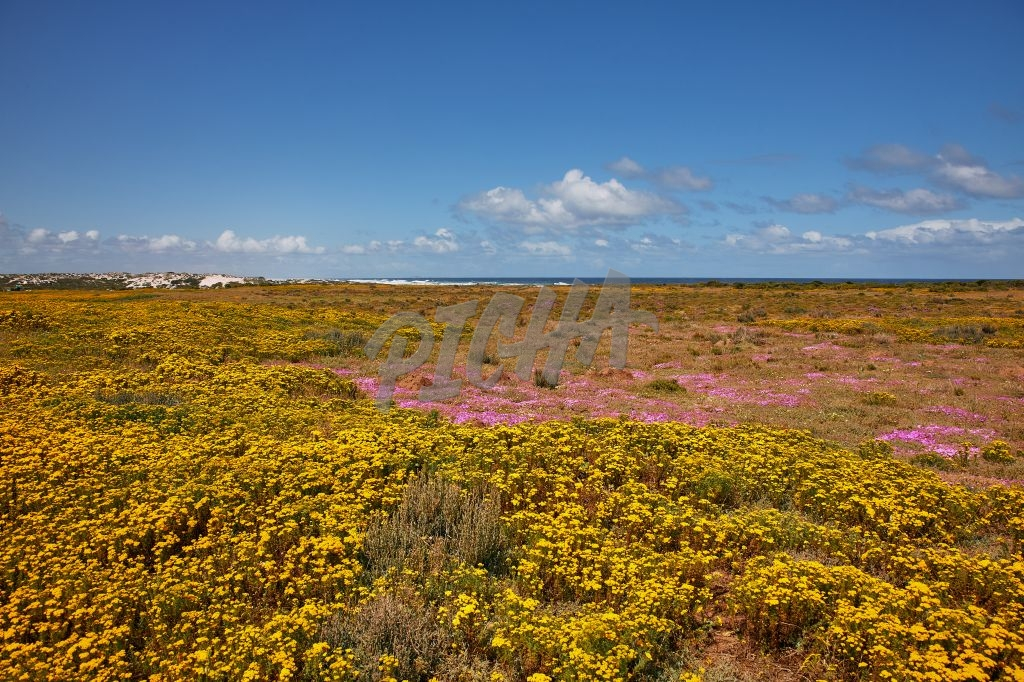 Colourful field of flowers