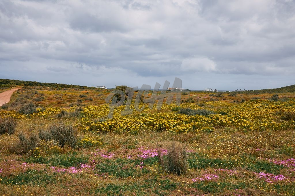 Colourful landscape with flowers in bloom