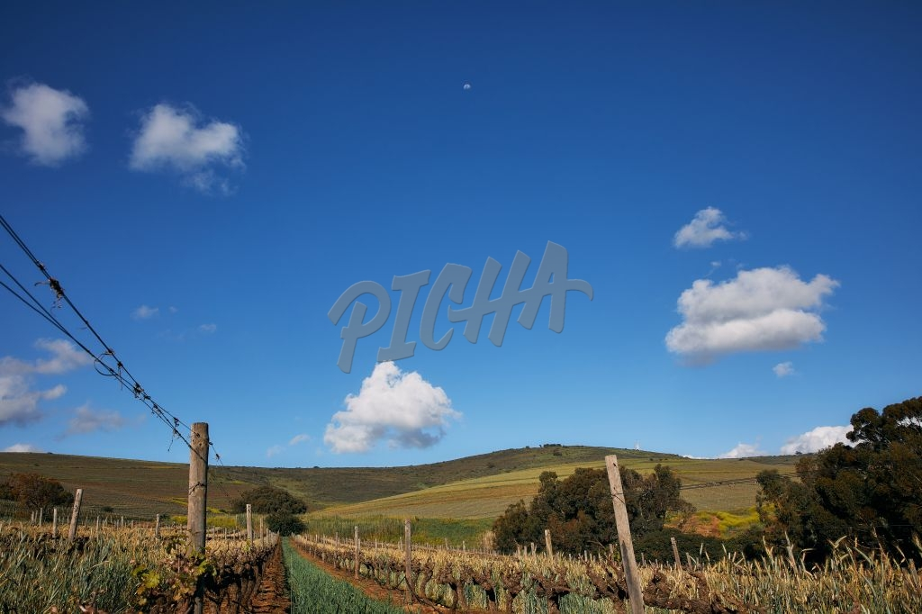 Landscape of a vineyard