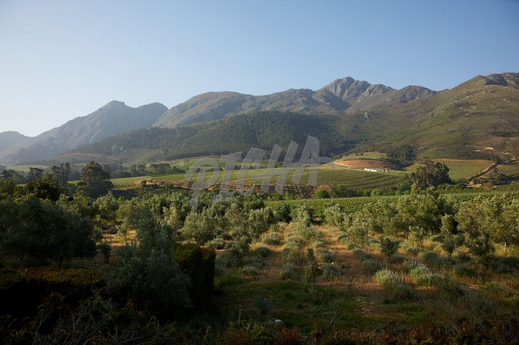 Gorgeous Franschoek Valley views