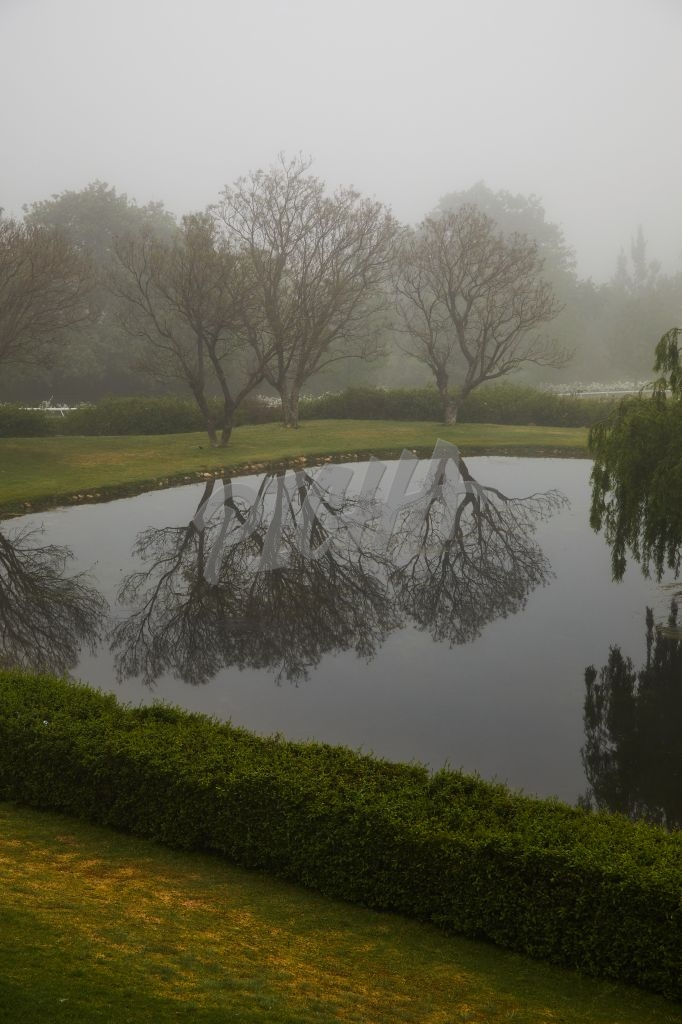 Misty trees reflected in the water