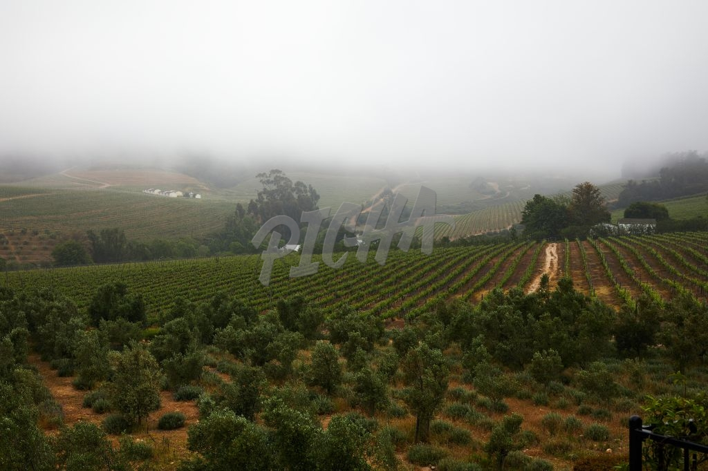 Misty vineyard views in Franschoek