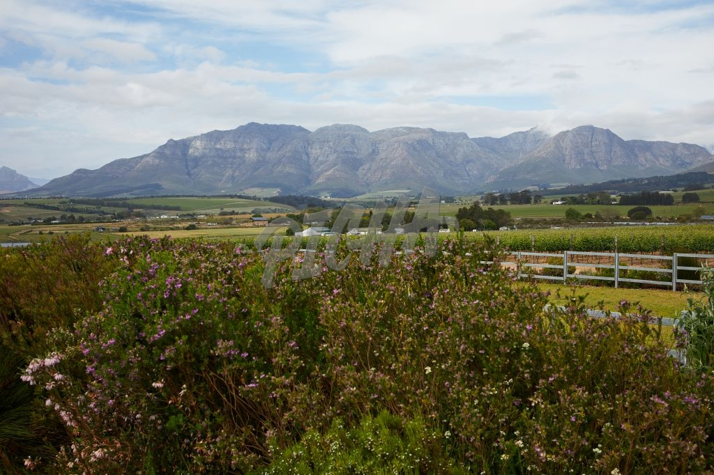 Franschoek Valley Views