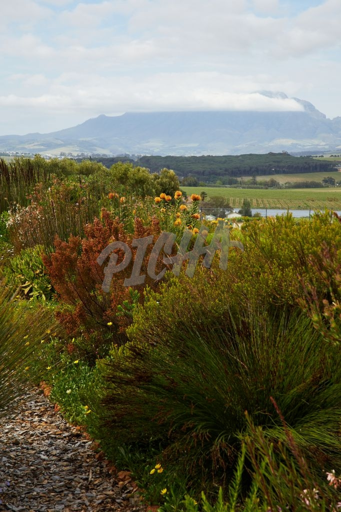 Stellenbosch flora and forna