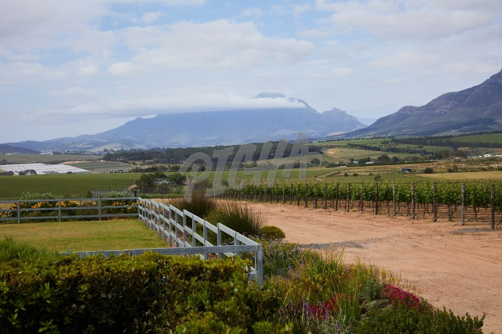 Stellenbosch views